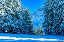 Schneeschuh  wandern durch den Winterwald