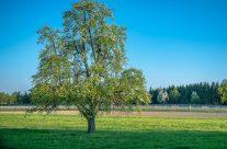 Thurgau Apfelland