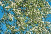 Frühlingsgruss aus  Kradolf