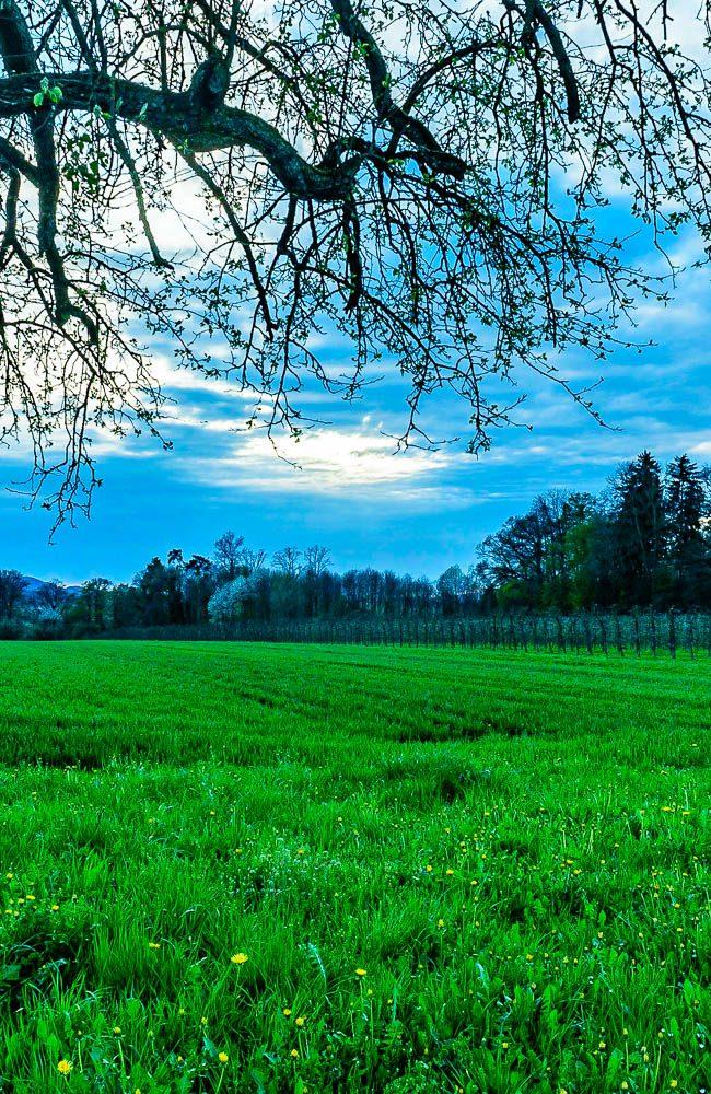Thurgau der Kanton der Apfelbäume