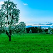 Der Frühling ist auch in Kradolf  angekommen