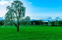 """Der Kanton Thurgau oder """"Mostindien"""