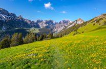 Frühsommer wanderung  auf  der  Alp Sigel