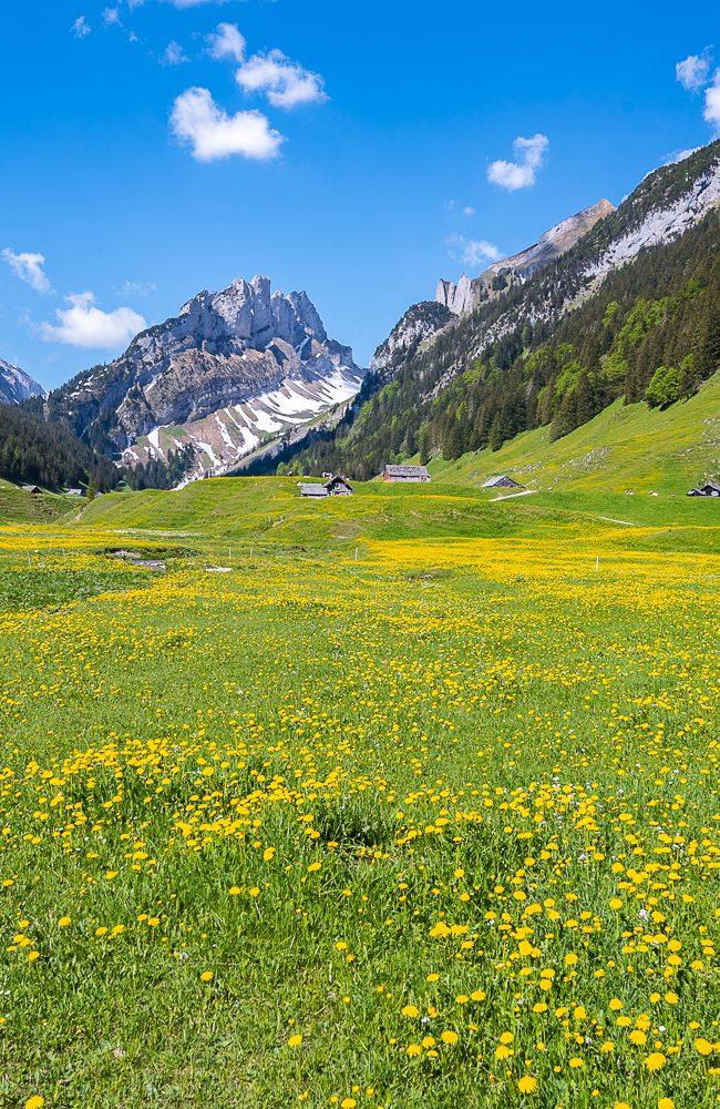Blick zu den Alpstein Bergen