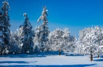 Winter im Thurgau