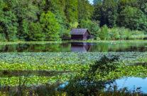 Die Bommer Weiher sind heute ein zu jeder Jahreszeit geschätztes Naherholungsgebiet. Das ganze Weihergebiet steht heute unter Naturschutz und ist ein wichtiger Lebensraum für Wasservögel und Amphibien.