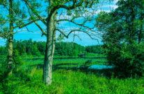 Die Landschaft der Bommer Weiher gehört «zum Schönsten, was in dieser Art im Kanton Thurgau noch vorhanden ist